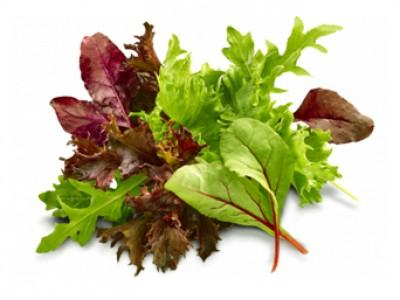 Baby Leaf® Salatmix