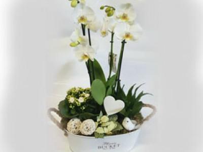 Exklusives Orchideen Arrangement XL