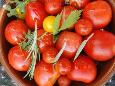 La ´Bio Tomatenpflanzen
