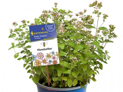 Beebetter Blühkräuter-Kollektion