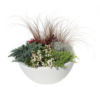 Gartencenter Höppener | Pflanzen-Arrangements