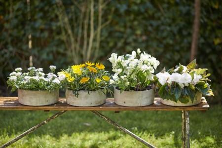 Gartencenter Höppener | Pflanzen
