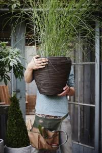 Gartencenter Höppener | Für jede Topfpflanze den passenden Pflanzkübel